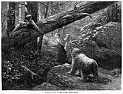Bear Hunt, 1876 Print by Granger