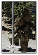 LeeAnn McLaneGoetz McLaneGoetzStudioLLCcom - Bear Pole Dancing