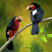 Bearded Barbet Posters - Bearded Barbets Poster by Thanh Thuy Nguyen