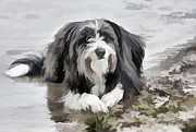 Collie Digital Art Posters - Bearded Collie Poster by Iain S Byrne