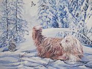 Collie Painting Framed Prints - Bearded Collie in the Snow Framed Print by Lee Ann Shepard