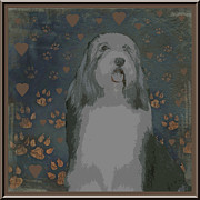 Collie Digital Art Posters - Bearded Collie Poster by One Rude Dawg Orcutt