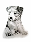 Collie Drawings Posters - Bearded Collie Pup Poster by Michelle Harrington