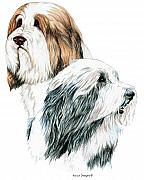 Kathleen Drawings - Bearded Collies by Kathleen Sepulveda