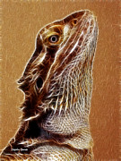 Stephen Younts - Bearded Dragon
