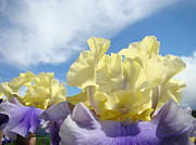 Flora Photography Prints Posters - Bearded Iris Flowers art prints Floral Irises Poster by Baslee Troutman Floral Fine Art Prints