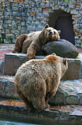 Weary Framed Prints - Bearish Couple Framed Print by Jutta Maria Pusl