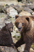 Tim Grams - Bears at a River