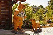 Mick Anderson - Bears at Taprock