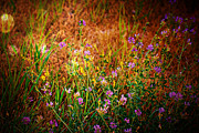 Beautiful Purples Prints - Beautiful And Wild Flowers Print by Christy Patino
