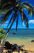Trees Greeting Cards Prints - Beautiful Anini Beach  Print by Kathy Yates