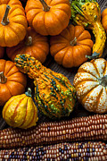 Gourds Posters - Beautiful autumn Poster by Garry Gay