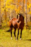 Horse Images Photo Framed Prints - Beautiful Autumn Horse Framed Print by James Bo Insogna