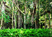 Florida Trees Posters - Beautiful Banyan Poster by Carol Groenen