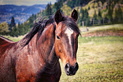Bay Horse Metal Prints - Beautiful Bay Horse In Pasture Metal Print by Tracie Kaska