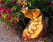 Beautiful Bengal Cat Print by Phyllis Kaltenbach