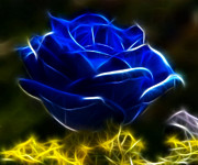 Pamela Johnson - Beautiful Blue Rose