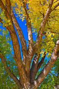 Autumn Photography Prints Posters - Beautiful Blue Sky Autumn Day Poster by James Bo Insogna
