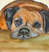 Boxer Painting Prints - Beautiful Boxer Print by Amy Pilafas