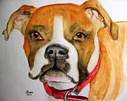 Boxer Painting Framed Prints - Beautiful Boxer Framed Print by Carol Grimes