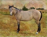 Quarter Horses Framed Prints - Beautiful Buckskin Framed Print by Betty LaRue