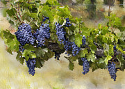 Purple Grapes Prints - Beautiful Clusters Print by Sharon Foster
