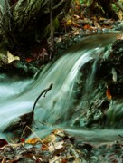 Mario Brenes Simon Metal Prints - Beautiful Creek Metal Print by Mario Brenes Simon