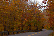 Foliage Photographs Prints - Beautiful Drive Print by Robert  Torkomian