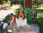 Collie Digital Art Posters - Beautiful Gracie Girl Poster by Susie Fisher