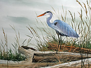 Driftwood Posters - Beautiful Heron Shore Poster by James Williamson