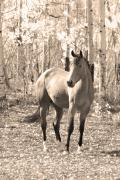 Fall Photos Framed Prints - Beautiful Horse In Sepia Framed Print by James Bo Insogna
