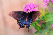 Pipevine Swallowtail Butterfly Prints - Beautiful Morning Print by Betty LaRue