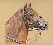 Horse Pastels Metal Prints - Beautiful Paso Fino Horse Metal Print by Terry Kirkland Cook