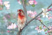 Perching Framed Prints - Beautiful Spring Framed Print by Betty LaRue