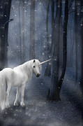 Snowy Night Prints - Beautiful Unicorn in Snowy Forest Print by Ethiriel  Photography