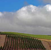 Clouds Photographs Digital Art - Beautiful Vineyard by Kami McKeon