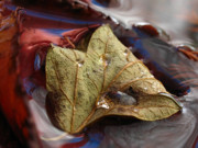 Abstract Leaf Prints - Beautiful World Print by Juergen Roth