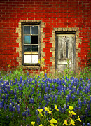 Rustic Art Framed Prints - Beauty and the Door - Texas Bluebonnets wildflowers landscape door flowers Framed Print by Jon Holiday