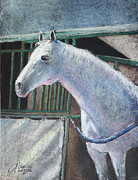 White Horses Pastels Framed Prints - Beauty Framed Print by Arline Wagner