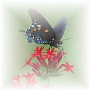 Judy Hall-Folde - Beauty Flies