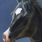 Arabian Horse Art Posters - Beauty in Black Poster by Alecia Underhill