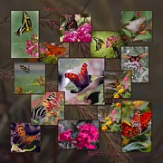 Vicky Browning Posters - Beauty in Butterflies Poster by DigiArt Diaries by Vicky Browning