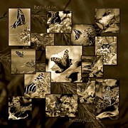 Satyr Prints - Beauty in Butterflies II Print by DigiArt Diaries by Vicky Browning
