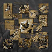 Satyr Prints - Beauty in Butterflies V Print by DigiArt Diaries by Vicky Browning