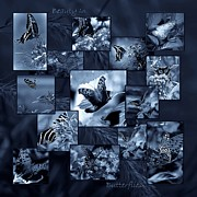 Dark Gray Blue Framed Prints - Beauty in Butterflies VIII Framed Print by DigiArt Diaries by Vicky Browning