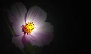 Amee Stadler - Beauty in Darkness