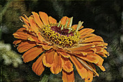 Macro Mixed Media Framed Prints - Beauty In Orange Petals Framed Print by Deborah Benoit