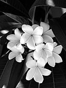 Black And White Floral Art - Beauty Is Simple by Vilma Rohena