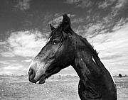 Wild Horse Prints - Beauty Print by Jimmy Bruch