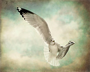 Flying Seagull Art - Beauty Of Flight by Jody Trappe Photography
